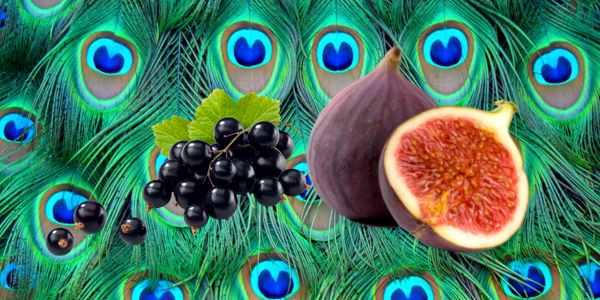 Alimentos Que Producen Feromonas Dispara Tu Nivel De Atracción Sexual